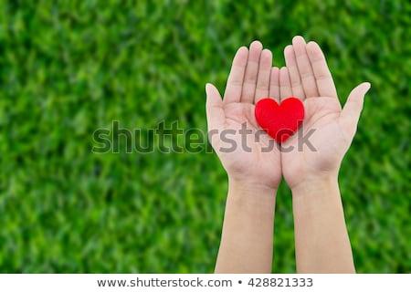 Foto stock: Rojo · corazón · hierba · forma · de · corazón · hierba · verde · primavera
