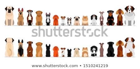 Chiot rottweiler portrait bébé chien noir Photo stock © cynoclub