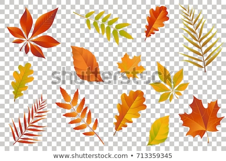 autumn illustration with colorful falling leaves chestnut and lettering on abstract colorful backgr stock photo © articular