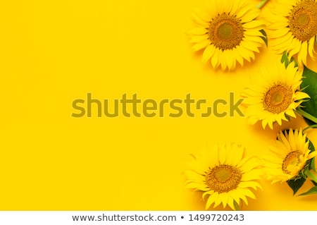 flowers of sunflower leaves and seed autumn concept stock photo © illia