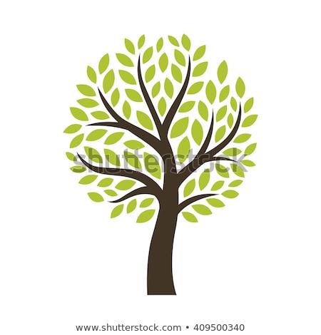 Stilizzato vettore albero icona simbolo rosolare Foto d'archivio © blaskorizov