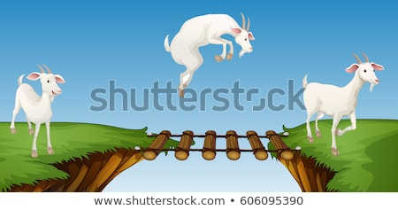 three goats crossing bridge stock photo © colematt