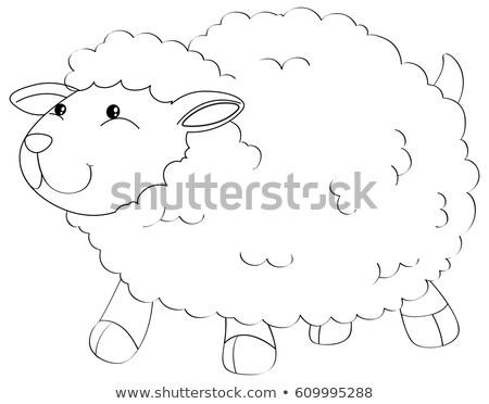 Zwierząt cute owiec ilustracja charakter tle Zdjęcia stock © colematt