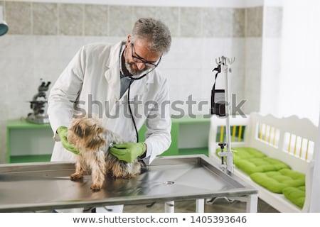 Veterinarian examining dog Stock photo © Kzenon
