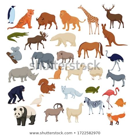 Ayarlamak vahşi hayvanlar örnek arka plan kaplan maymun Stok fotoğraf © bluering