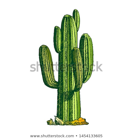 Kaktus atramentu wektora rodziny w stylu retro Zdjęcia stock © pikepicture