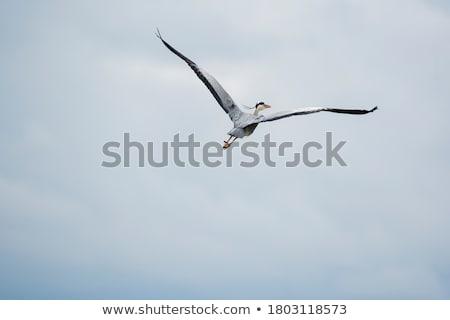 Reiger vliegen oranje hemel Stockfoto © mayboro