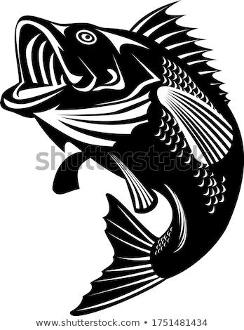 Florida Largemouth Bass Swimming Up Black and White Retro Stock photo © patrimonio