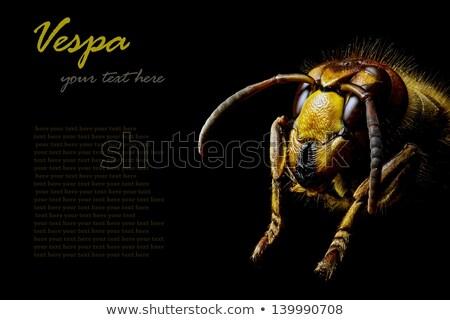 Hoofd wesp zwarte extreme bee Stockfoto © gewoldi