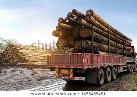 Huge stack of logs for lumber at a sawmill Stock photo © mybaitshop