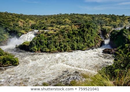 Uganda · részlet · zöld · sziklaformáció · Afrika · fa - stock fotó © prill