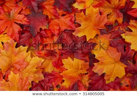 Colorido vermelho amarelo folhas japonês Foto stock © Arrxxx