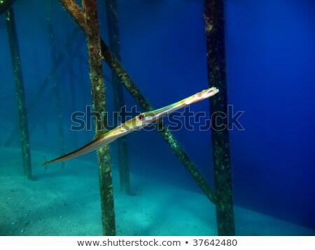 воды рыбы природы пейзаж морем Сток-фото © stephankerkhofs