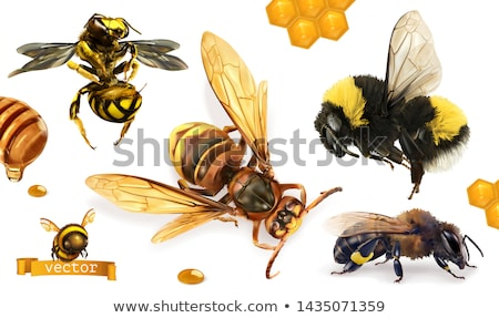 bumblebee flies Stock photo © thomaseder