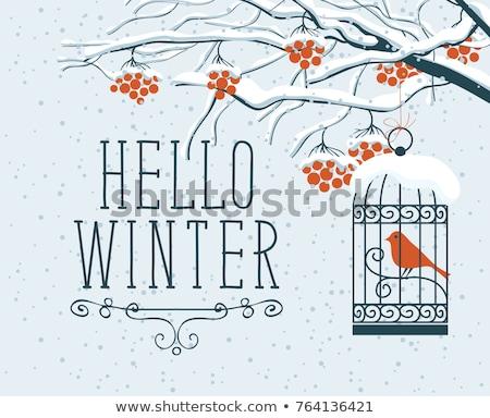 Tél ketrec madár kéz rajz illusztráció Stock fotó © Elmiko