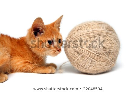 small cat and big clew of wool Stock photo © Mikko