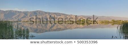 sosna · śniegu · góry · krajobraz · górskich - zdjęcia stock © wildnerdpix