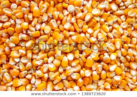 corn grains of close up background stock photo © tashatuvango