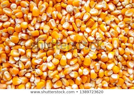 Kukorica magvak közelkép végtelenített textúra háttér Stock fotó © tashatuvango