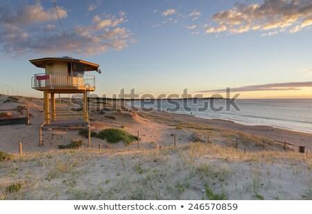Piękna rano plaży Sydney Świt świetle Zdjęcia stock © lovleah