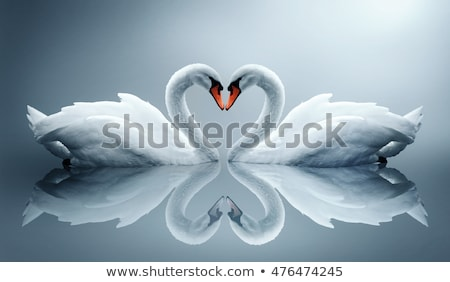 Sevmek örnek su çift güzellik göl Stok fotoğraf © adrenalina