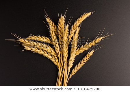 buğday · tahıl · çiftlik · bitki · tarım - stok fotoğraf © More86