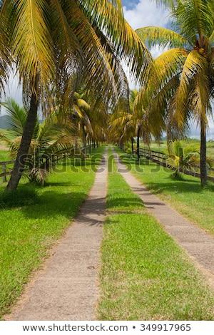 Vazio estrada banana plantação céu fruto Foto stock © CaptureLight