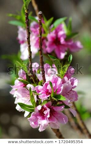 Liefde boom meisje karakter Stockfoto © Soleil
