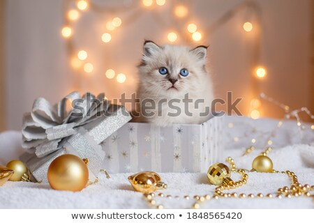 Kitten in the box Stock photo © dmitroza