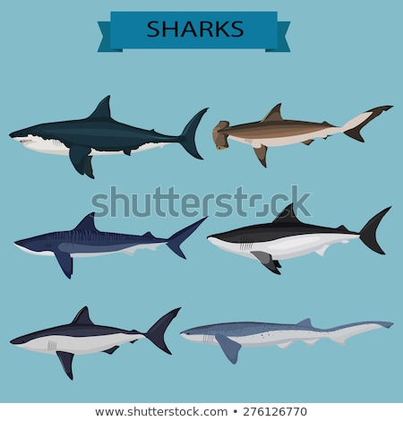 Underwater postcard with shark, vector illustration Stock photo © carodi
