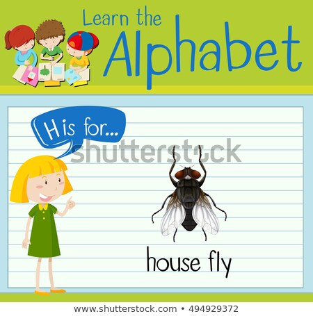 Flashcard letter H is for house fly Stock photo © bluering