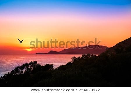 sólyom · repülés · fák · színes · kép · nap · erdő - stock fotó © Backyard-Photography