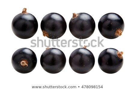 sprig of black currant Stock photo © Digifoodstock