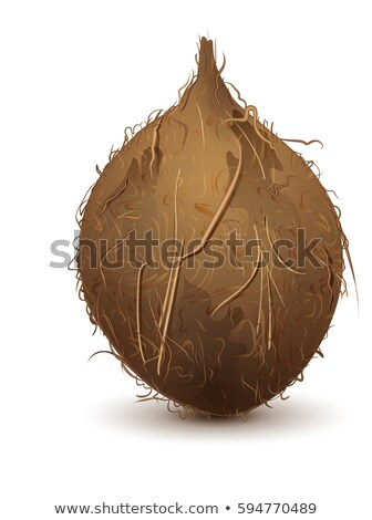 Brown shaggy coconut stands upright Stock photo © orensila