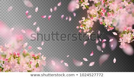 ág sakura cseresznye virágzó virágok vektor Stock fotó © robuart