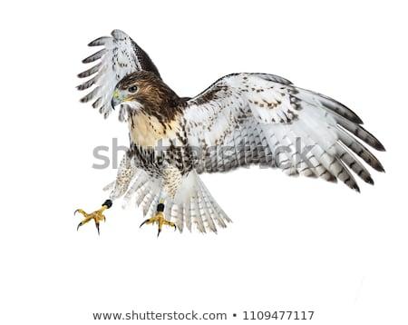 Stockfoto: Geïsoleerd · witte · vol · vlucht · landing · naar