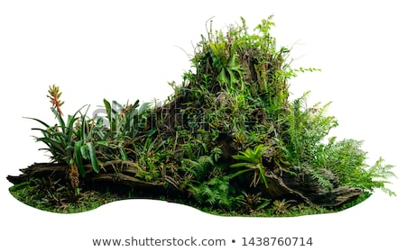 Moss plant with roots Stock photo © colematt