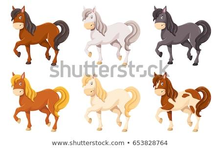 笑みを浮かべて 黒 馬 実例 白 顔 ストックフォト © colematt