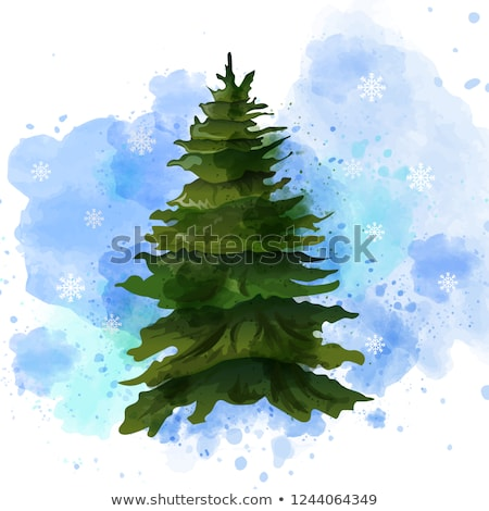 Fir tree Vector watercolor isolated on white. Template layout gr Stock photo © frimufilms