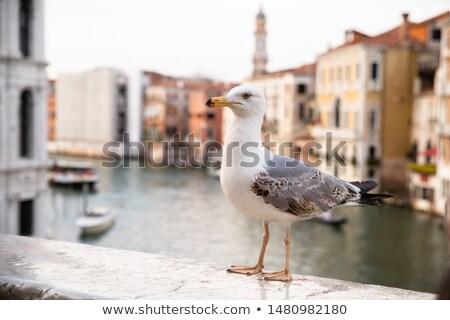 Zeemeeuw brug portret Venetië water stad Stockfoto © AndreyPopov