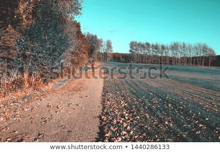 Najaar Denemarken weg groene weide golfbaan Stockfoto © bdspn