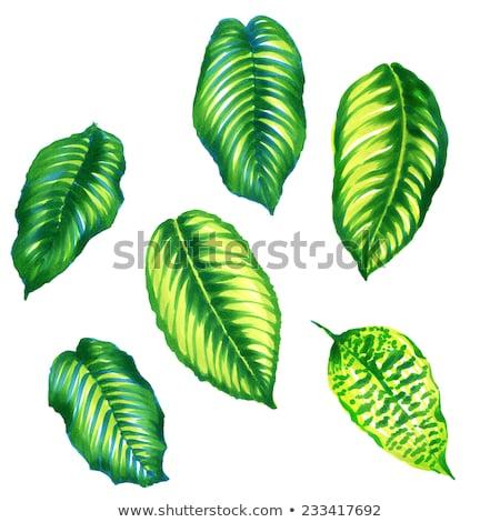 Incroyable juteuse feuilles vertes tropiques arbre soleil Photo stock © galitskaya