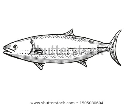 Kingfish New Zealand Fish Cartoon Retro Drawing Stock photo © patrimonio
