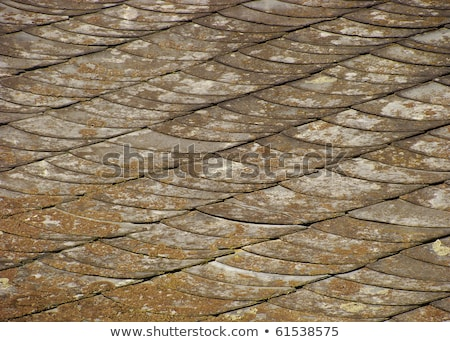 roof of house showing shales scales  with spurs and wear                                 Stock photo © Melvin07