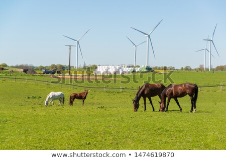 Couple in front of wind farm Stock photo © photography33