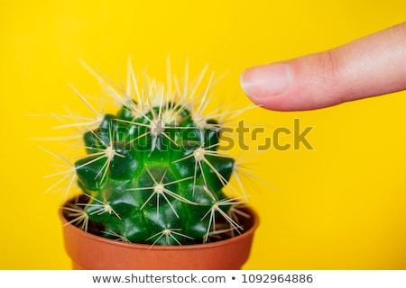 Finger prick Stock photo © inxti