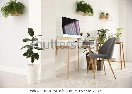 Groene plant ingericht tabel voorraad foto Stockfoto © nalinratphi