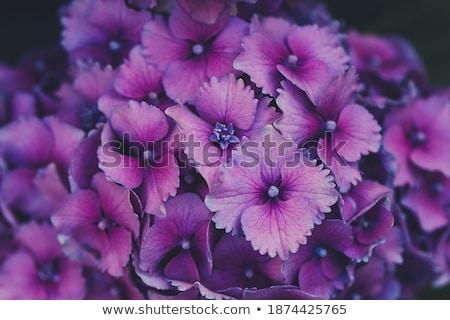 Garden background, vivid bright springtime concept Stock photo © JanPietruszka