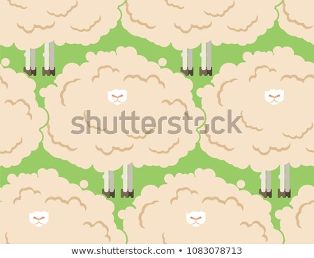 Hairy sheep flock. Shaggy lamb herd. vector illustration Stock photo © MaryValery