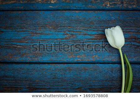 Colorful tulips on old wooden background stock photo © Melnyk